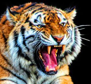 bienestar-psicologico-tigre